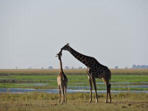 Southern African Safari